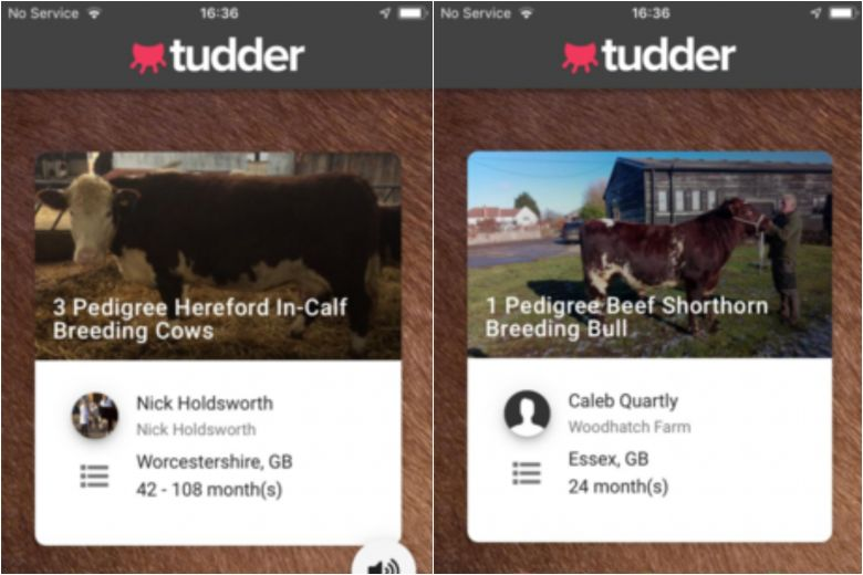 Tudder, Tinder for easy cows (finding) and horny bulls